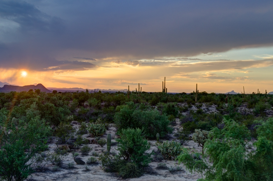 Tucson Desert and Sunset