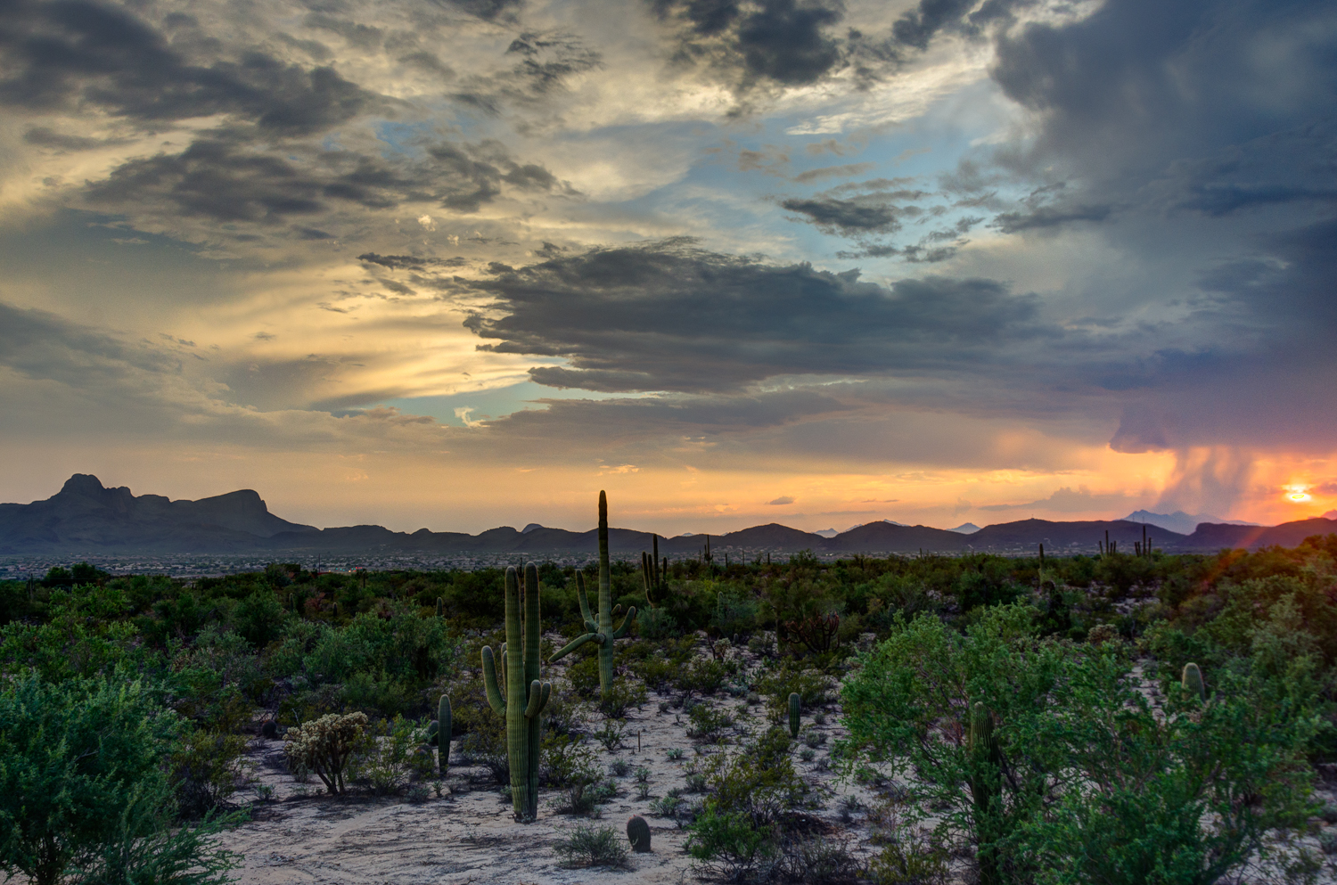 Tucson michelle munoz 39 s photography blog for Desert landscape