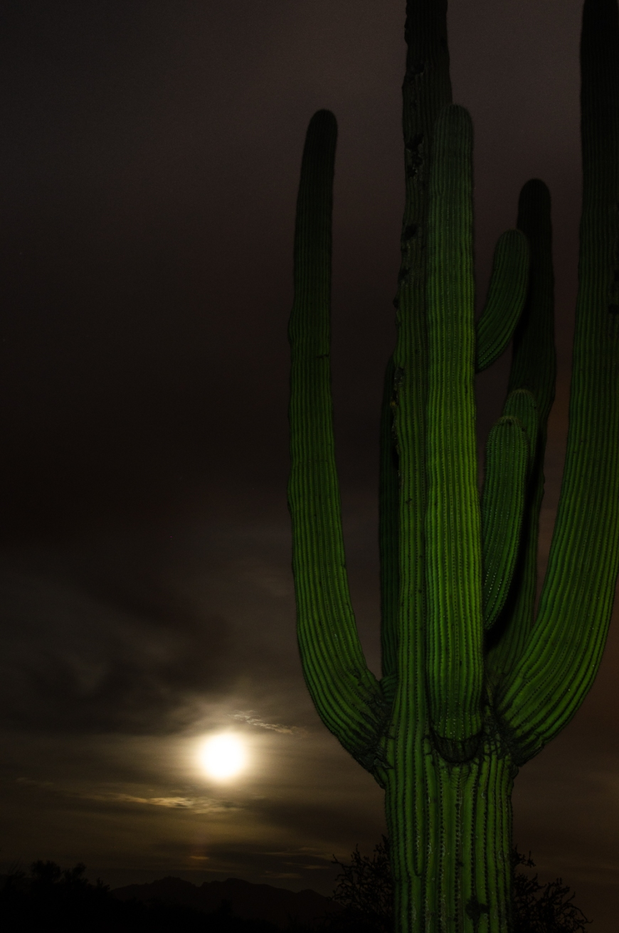Saguaro and moon