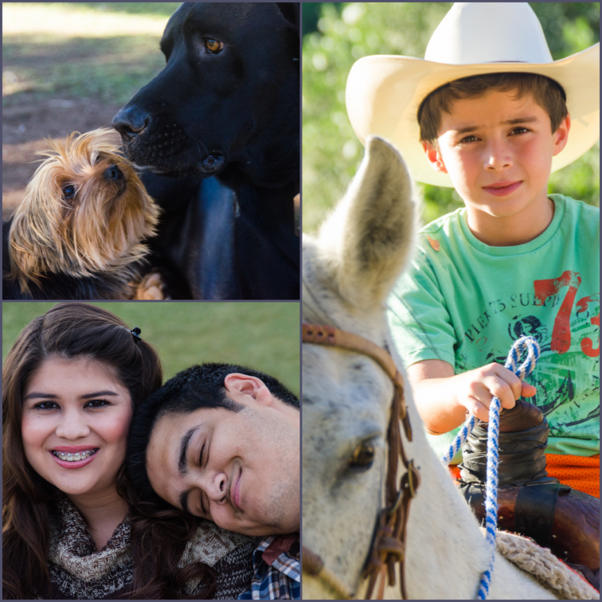 Family and Animals 2