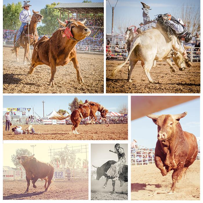 Bulls and Hoses