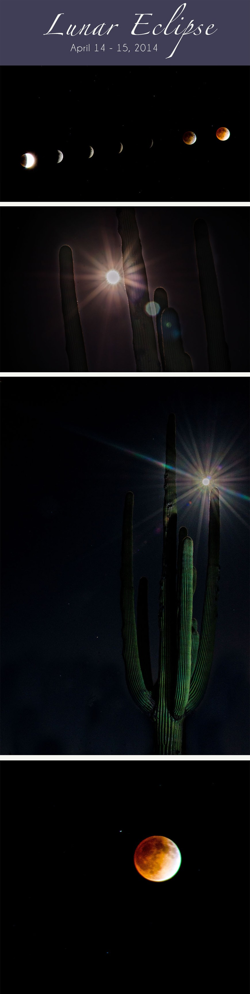 Lunar eclipse in the Tucson Desert
